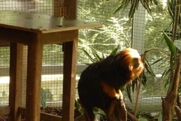 Zoo van Antwerpen